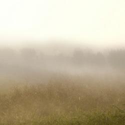 Ontwakend landschap