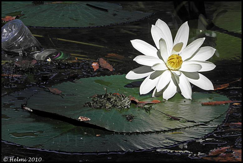 Schoonheid & rommel... - Ook in een prachtig natuurpark/gebied, gooien mensen hun troep in het water... Foto gemaakt in natuurpark Selva Negro, Ni