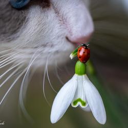 Je kan het voorjaar ruiken!