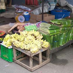 markt Thailand Surat Thani
