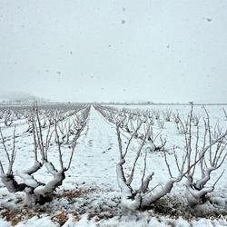 Laatste sneeuwfoto........