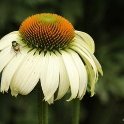 Flower&Fly