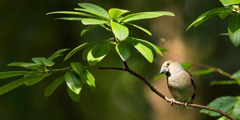 appelvink - Zo had ik nog nooit (bewust) een appelvink gezien.. zo zat er een stel perfect voor mijn vogelhut. Voor het eerst echt lekker een goed mom