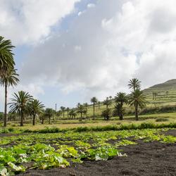 Lanzarote 15 - omgeving Haría in het Dal van de Duizend Palmen