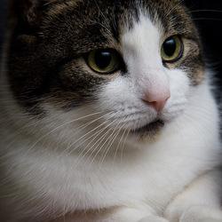Katoo le chat