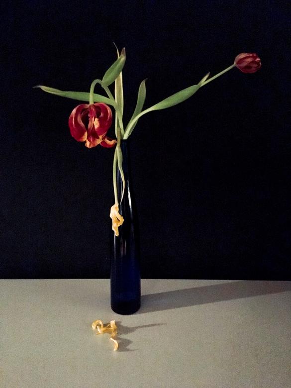 verval - Stilleven:vaas met uitgebloeide tulpen.<br />