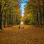Herfst in het Heilooerbos