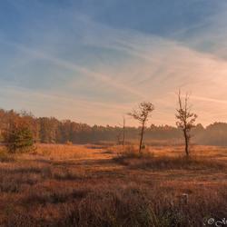 zonsopkomst in het Weerterbos