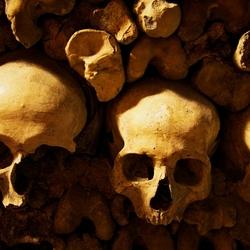 3 schedels op een rij