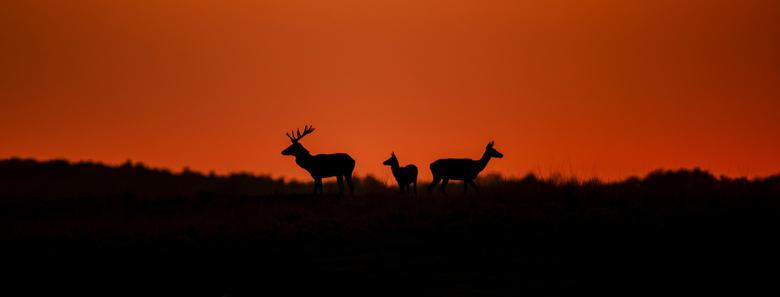 Family at sunset - Hertenbronst op een andere wijze vastgelegd. Silhouetten tijdens zonsondergang, op de grens van licht en donker. <br /> <br /> Ha
