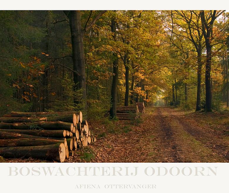 boswachterij Odoorn - Een paar weken terug was het nog mooi kleurig in het bos, de stammetjes hout voor een warm vuurtje in de kachel lagen al gereed!