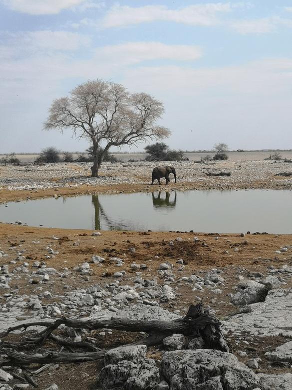 Namibië: olifant -