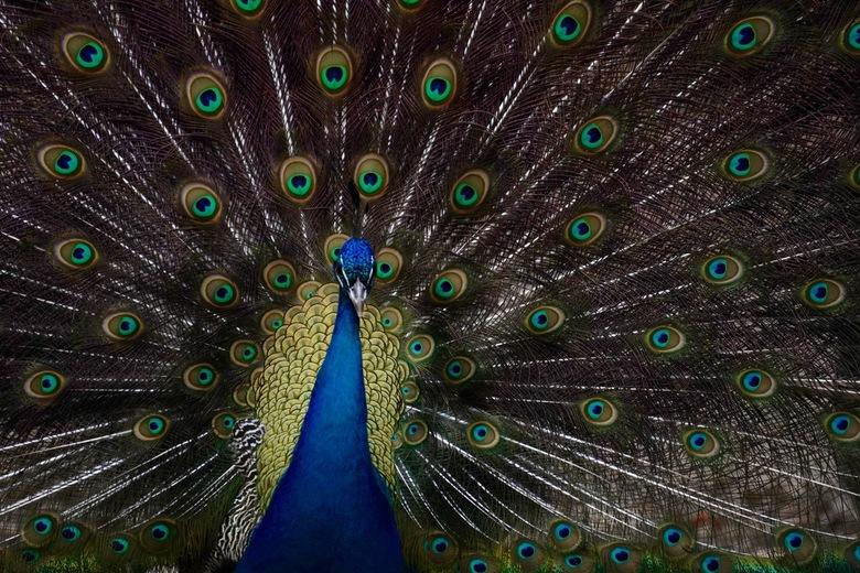 Vroege vogel - In vol ornaat, zo vroeg in het jaar. Je zal er maar zin in hebben!