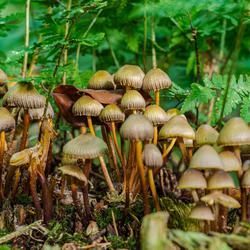 Bundeltje paddenstoelen