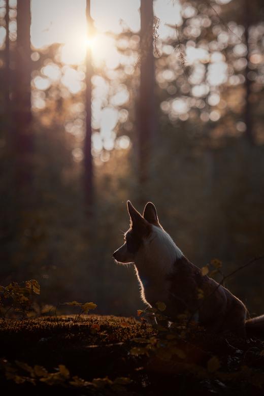 magisch bos... -