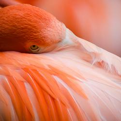 Flamingo in alerte rust