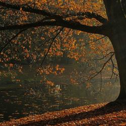 Herfst-Sonsbeekpark3