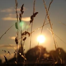 Zonsondergang in een graanveld