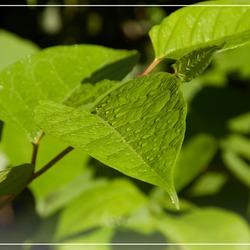 Fris groen blaadje