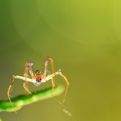 The small spider with drops.