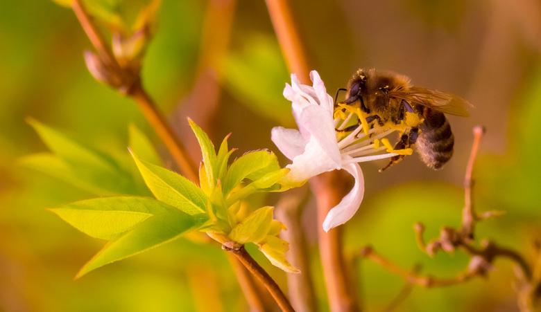 Beestjes tijd! - Eindelijk na al die maanden, lente! Beestjes. Hoewel ik zeker geen groot insecten liefhebber ben in het 'normale' leven en