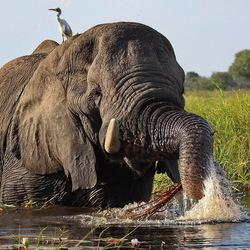 Okavango Delta -1-