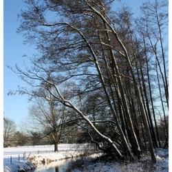 Vorst en sneeuw