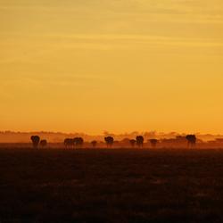 Safari Sunset I