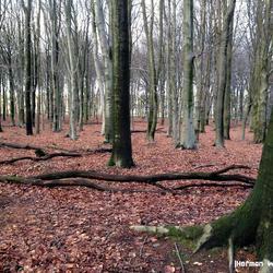 Bomen in het Springendal