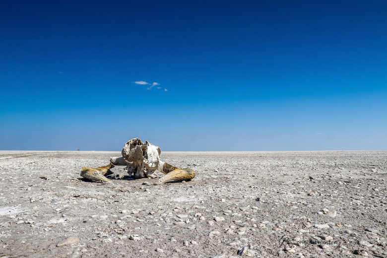 Makgadikgadi Pan – Botswana