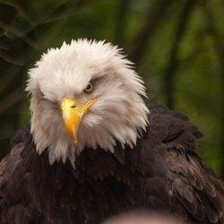 Harly de mascotte  van Go Ahead Eagles