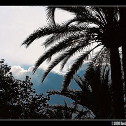 Zilveren palm