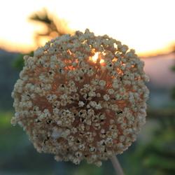 Zonsondergang in de tuin