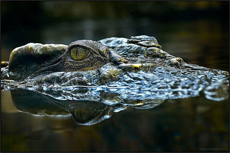 """Kroko - Deze jongen poseerde gewillig voor mij, maar een lach kon er helaas niet af <img  src=""""/images/smileys/smile.png""""/>"""