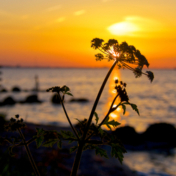 zonsondergang IJmeer