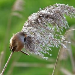 Wapper lekker in de wind