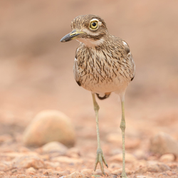 Water-Thick-Knee