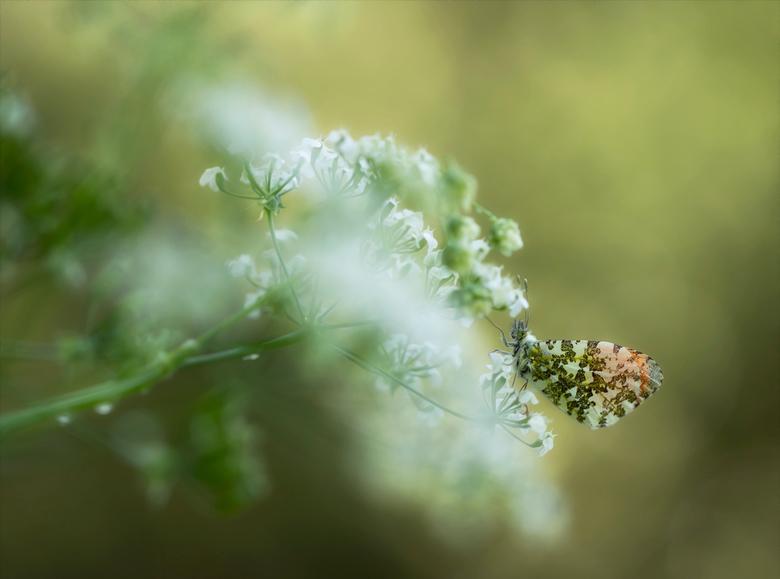 Wake up - Al heel veel oranjetipjesfoto&#039;s gezien hoop dat deze foto nog een mooie aanvulling is.<br /> Beschut onder de bomen op het fluitenkrui