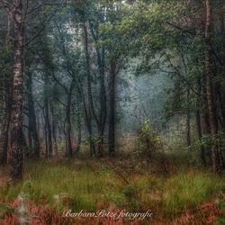 Vroege ochtend in het bos.