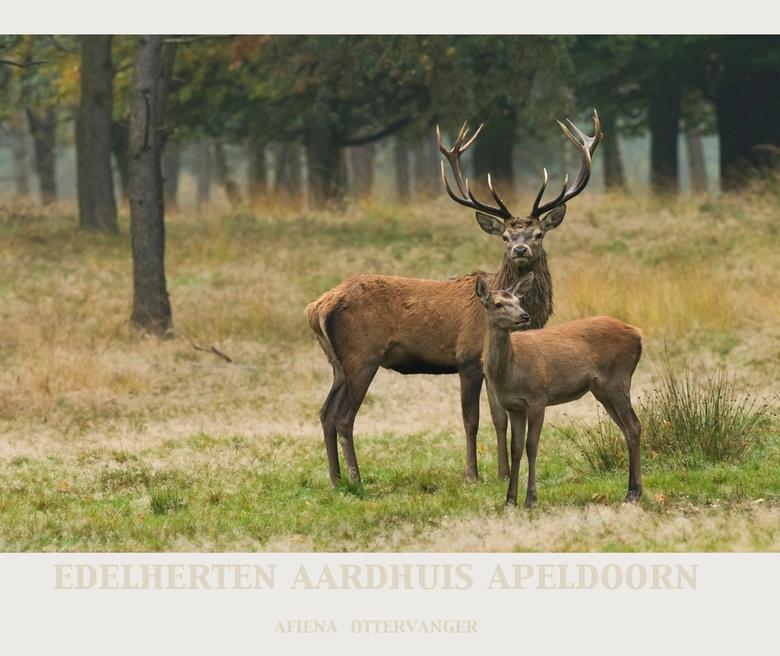 Dhr. en Mevr. EDELHERT - Twee van de edelherten van het Aardhuis in Apeldoorn!<br /> Jammer dat dit park in de winter gesloten is, was daar graag nog
