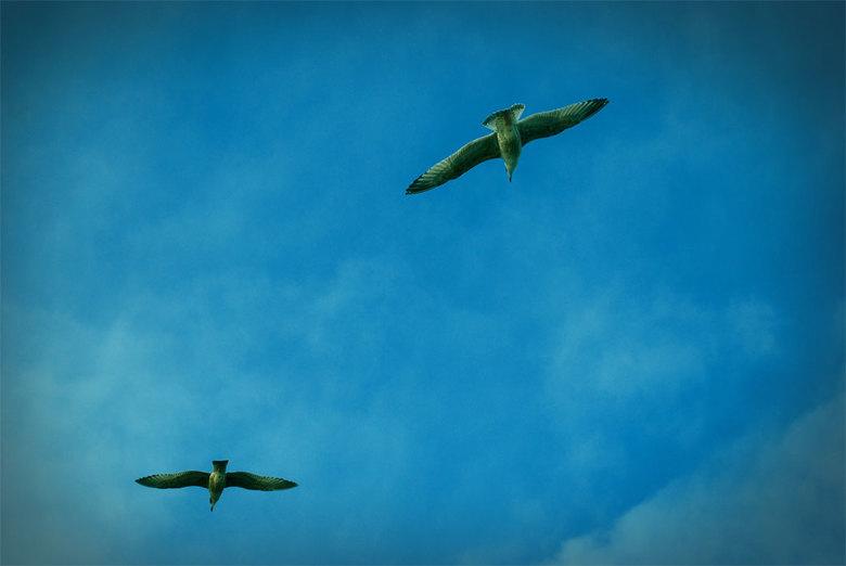 Birds flyin' high - Birds flyin&#039; high you know how I feel<br /> Sun in the sky you know how I feel<br /> Breeze driftin&#039; on by you know ho
