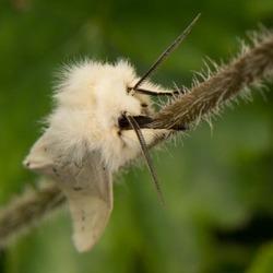 Zacht vlindertje...