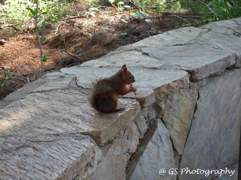 Etende eekhoorn -