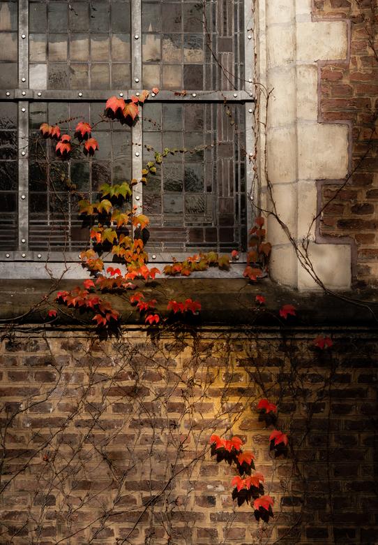 Herfstkleuren - Herfstkleuren op een kerkmuur in Kevelaer