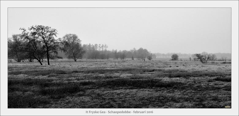Schaopedobbe - Elsoo - Friesland - Wandelexcursie door een heide/veen gebied na een nacht met vorst<br /> Ook mooi in zwart-wit.....
