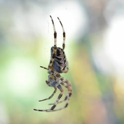 Pretty Spider