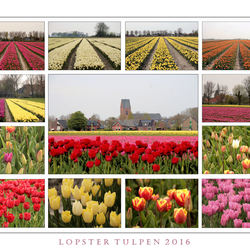 Tulpen rond Loppersum 2016