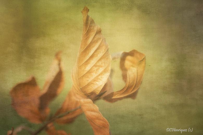 Stilleven herfstblad - Zo weer thuis van het ziekenhuis na een heupoperatie dus loop ik een beetje achter met reageren en inhalen ga ik niet meer doen