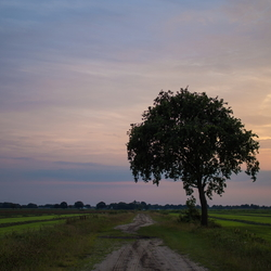 Avondboom