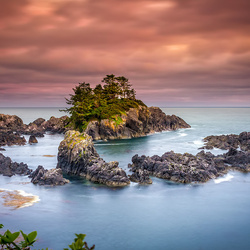 Wild-Pacific